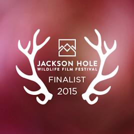 Image result for banff media festival 2015