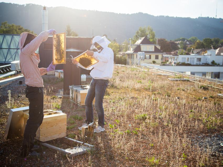 Petition «Insektensterben aufklären» DE
