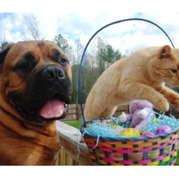 Easter and your Pet