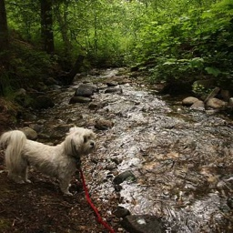 Pets in our National Forests